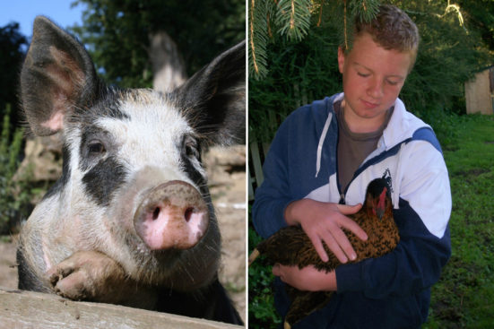 pig and boy with hen